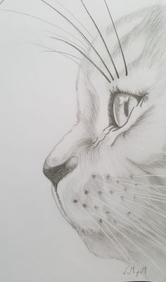 Most up-to-date Absolutely Free pencil drawing anime Thoughts These pencil drawing techniques from top artists will allow you to take your drawing skills to anoth Pencil Art Drawings, Easy Drawings, Drawing Sketches, Sketching, Realistic Drawings Of Animals, Drawing Animals, Sketch Art, Sketch Of Cat, Drawings Of Cats