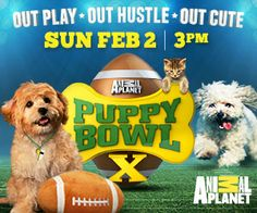 Puppy Bowl: Animal Planet