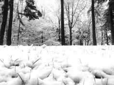 WinterOnFriluftsvägen@Sundbyberg20121129