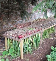 Gardening Vegetable How to Harvest Onions When your onions finish developing. When they've finished developing, you'll notice the lowest leaves start to yellow and wither. Shortly after, the stems will flop over at the n Vegetable Garden Design, Veg Garden, Garden Types, Edible Garden, Potager Garden, Harvest Garden, Fruit Garden, Easy Garden, Garden Beds