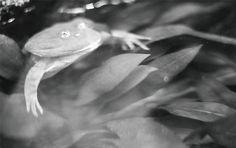 カエルのこのアングルはなかなか見れない!  《心》にゆとりを持とうと語りかける photo