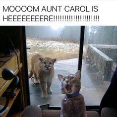 Aunt carol                                                                                                                                                                                 More