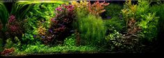 Planted Tank song of plants  by Michalis Papadakis - Aquascape Awards
