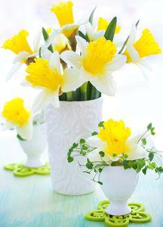spring.quenalbertini: Spring Flowers