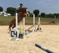 Green horses are hilarious over fences. Sooo cute!