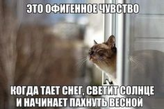 ✧ Домашние любимцы ✧ | OK.RU