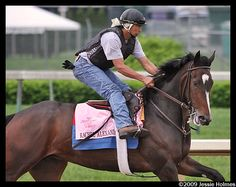 RACHEL ALEXANDRA (USA) B m 2006, Medaglia d'Oro - Lotta Kim. Winner of the 2009 Preakness Stakes, the first filly to win in 85 years. Champion 3yo Filly and US Horse of the Year in 2009. Winner of 12 other races and placed in 5 from 19 career starts. Now retired her first foal was a colt to the champion, Curlin.