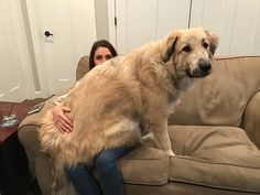 This doofus just turned one. Wife for scale.