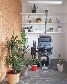 """Muy buenos días! Por fin es #viernes! Y para celebrarlo os enseño un rinconcito del #estudio repleto de #plantas. Lo confieso, en #casa y en el estudio, tenemos #obsesión por las #plantas. Y como dicen """"quedan #perfectas en #cualquier rincón"""" #greenobsession Home, Friday, Bom Dia, Be Nice, Studio, Plants"""