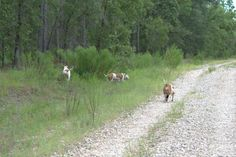 Taking a run through the property.
