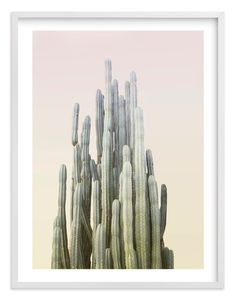"""""""Summer Yellow Cactus"""" - Photography Limited Edition Art Print by Wilder California. Yellow Cactus, Wall Art Prints, Fine Art Prints, Polaroid, Cactus Photography, Cactus Wall Art, Bohemian Interior Design, Custom Art, Canvas Frame"""