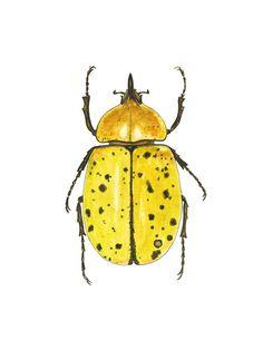 Entomología impresión del arte del escarabajo por LindsayBrackeen