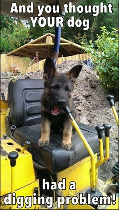 And you thought your dog had a digging problem.