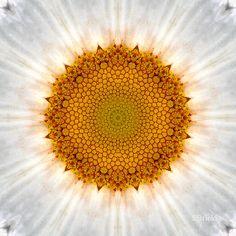 'Shasta Center Mandala' by Scott Bricker