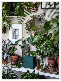 Indoor plants, cool plants, potted plants, room with plants, plant Rustic Bedroom Design, Small Bedroom Designs, Indoor Garden, Indoor Plants, Potted Plants, Sweet Home, Room With Plants, Bedroom Plants, Healthy Living Magazine