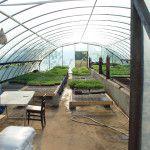 Timberwood Organics.