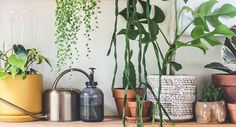 Top 10 Indoor Plants Foliage Plants, Potted Plants, Indoor Plants, Mother In Law Tongue, Swiss Cheese Plant, Fertilizer For Plants, Types Of Succulents, Peace Lily, Monstera Deliciosa