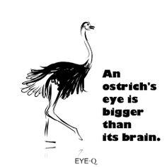 193 Best Eye Infographics Images Eyes Health Wellness