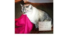 For some reason, I thought that Theodore was the only cat who did this.  http://pawsome.topix.com/slideshow/17004/slide28