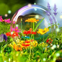 Amazing Wildflowers Butterflies | File Name : hd live wallpaper