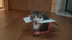 Why do cats love box?