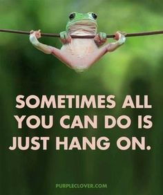 Hang in there frog life, funny animals, true quotes, best quotes, motivational Cute Quotes, Great Quotes, Funny Quotes, Funny Memes, Fun Sayings, Memes Humor, Funny Parent Quotes, Funny Birthday Quotes, Encouraging Sayings