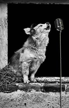 "#singer...can this be ""Howling Wolf ""?....lol...just joking, i like howling wolf...good blues.."