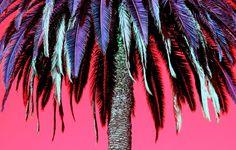 neon palm tree - Google Search