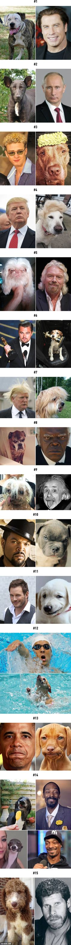 Celebrities Matched To Their Dog Look-Alikes Funny Animal Jokes, Cute Funny Animals, Funny Animal Pictures, Funny Dogs, Cute Dogs, Cute Puppies, Very Funny Memes, Funny Video Memes, Funny Relatable Memes