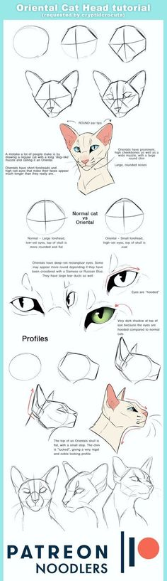 Oriental Cat Head tutorial by ClimbToThe. Oriental Cat Head tutorial by ClimbToTheStars Drawing Techniques, Drawing Tips, Drawing Sketches, Animal Sketches, Animal Drawings, Art Reference Poses, Drawing Reference, Cat Drawing Tutorial, Sketches Tutorial