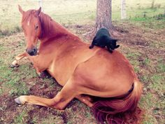 Champy and Morris, A Wonderfully Unusual Friendship Between a Full-Grown Horse and a Rescued Black Cat