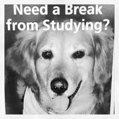 Need a break from studying? Therapy dogs will be in the first floor study rooms of Powell Thursday Dec. 6th and Tuesday Dec. 11, 12-2 p.m..