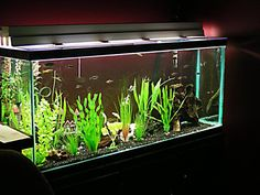 Sizes and filled weights for standard aquariums.