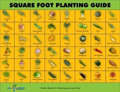 Planting Guide Chart - How To Space Your Seeds For Success - GardenBunch.com -   If you're a new gardener, you might be wondering how far apart you should space your seeds. To give your plants the best chance of survival, it's important to know each specific plant's spacing requirements.