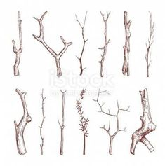 Hand drawn wood twigs, wooden sticks, tree branches vector rustic decoration elements royalty-free hand drawn wood twigs wooden sticks tree branches vector rustic decoration elements stock vector art & more images of abstract Tree Branch Tattoo, Tree Branch Art, Branch Drawing, Stick Tattoo, Twig Art, Branch Vector, Tree Sketches, Tree Drawings, Nature Drawing