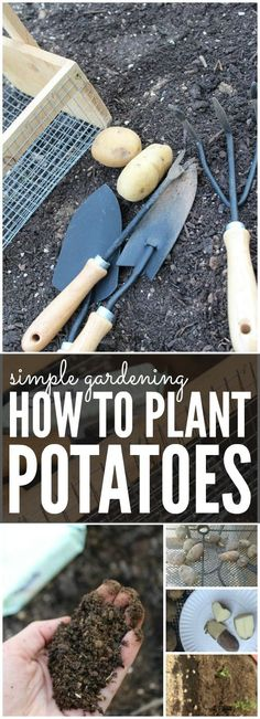 How to Plant Potatoes | Simple Gardening Tips for Spring and Summer! Garden Hacks for Beginners!