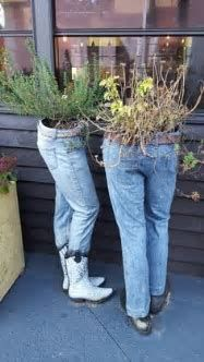 blue jean planters에 대한 이미지 결과