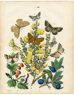 The Graphics Fairy: butterflies and moths