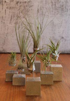 Beton holder til Tillandsia Air Plants, Potted Plants, Cactus Plants, Air Plant Display, Plant Decor, Deco Cactus, Decoration Plante, Air Plant Terrarium, Potting Soil