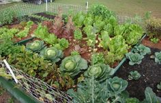How to Start a Garden – The Ultimate Guide | Prepper Universe