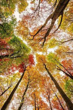 Beautiful colourful nature