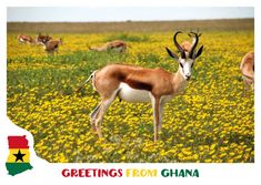 """Searching for a greeting card? We've got you covered. With thousands of designs, we offer the right card for every occasion. Like this beautiful postcard from our """"Vacation Greetings"""" category. Bring your moments to life, with MyPostcard"""