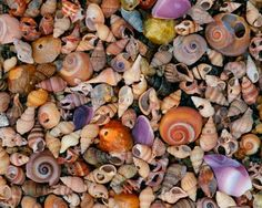 Up close, macro photo wall murals. Install like wallpaper. Miss Connecticut, Beach Wall Murals, Murals Your Way, Moon Images, Shell Collection, Moon Lovers, Macro Photography, New England, Photo Wall
