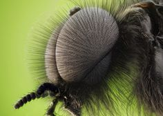 insect - Αναζήτηση Google