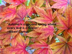 """""""Autumn is a second Spring where every leaf is a flower"""" Albert Camus"""