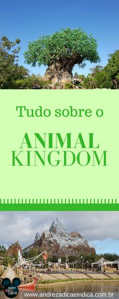 Saiba tudo sobre o Animal Kingdom, o parque mais animal da Disney #animalkingdom #disney #pinterest