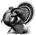 Lots of free printables at this site; I've fallen in love with this turkey!