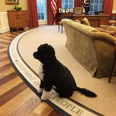 """Bo waiting for the boss to arrive this morning.""  From Pete Souza"