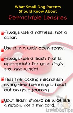 Are Retractable Leashes Dangerous? What Small Dog Parents Should Know - Little Dog Tips Dog Care Tips, Pet Tips, Leash Training, Cute Dog Photos, Pet Food, Injury Prevention, Puppys, New Tricks, Little Dogs