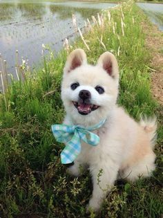 Just Beautiful Pictures Animal Dress Up, Just Beauty, Cute Pattern, Adorable Animals, Sale Items, Dogs And Puppies, Husky, Beautiful Pictures, Pets